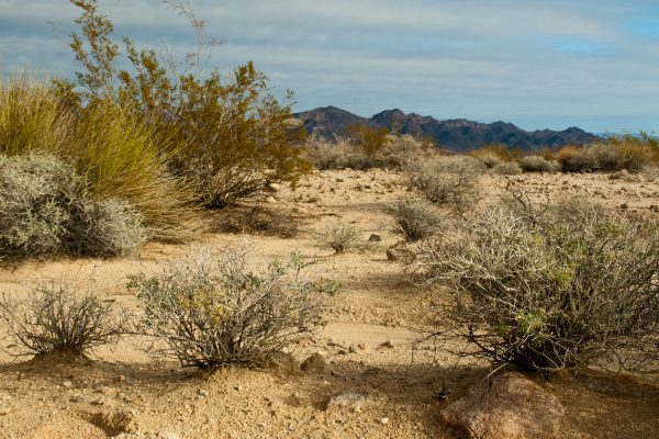 Raw desert by the Salton Sea