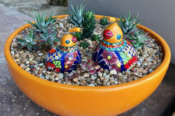 Colorful pottery, container garden, cactus