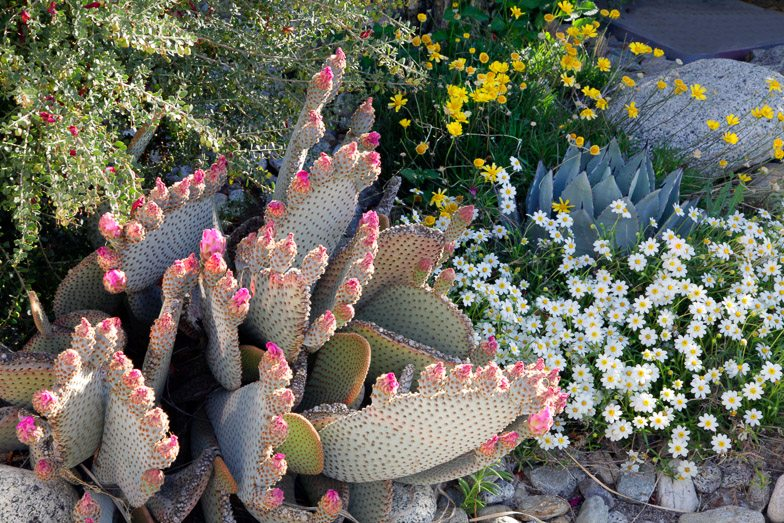 13th Annual Garden Tour Is March 18!