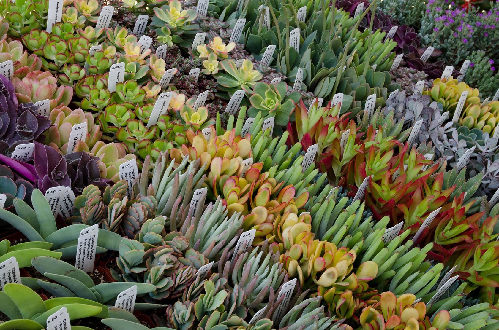 Annual Desert Garden Community Day   The Desert